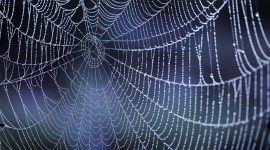 Spider Web High Quality Wallpaper