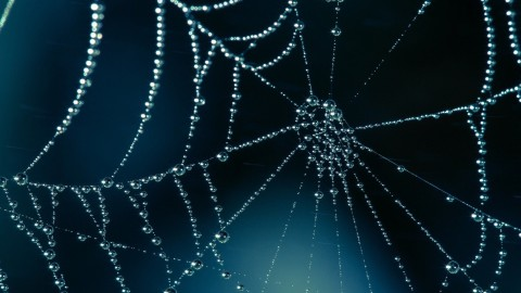 Spider Web wallpapers high quality