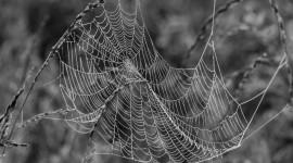 Spider Web Wallpaper Background