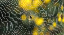 Spider Web Wallpaper For Desktop