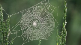 Spider Web Wallpaper For PC