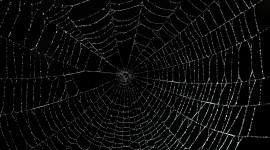 Spider Web Wallpaper Full HD