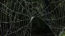 Spider Web Wallpaper Gallery