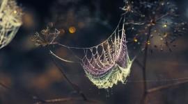 Spider Web Wallpaper HD