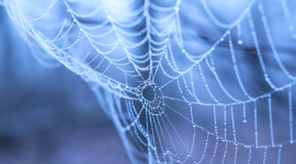 Spider Web Wallpaper HQ