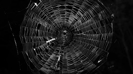 Spider Web Wallpaper High Definition