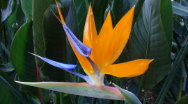 The Strelitzia Wallpaper Gallery