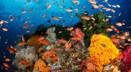 Underwater World Desktop Wallpaper