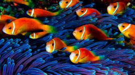 Underwater World Desktop Wallpaper For PC