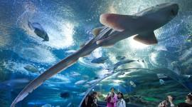 Underwater World Desktop Wallpaper Free