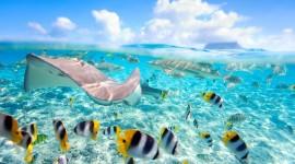 Underwater World Desktop Wallpaper HD