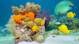Underwater World Desktop Wallpaper HQ
