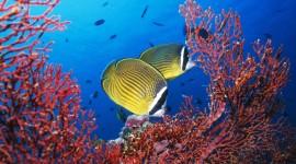 Underwater World High Quality Wallpaper