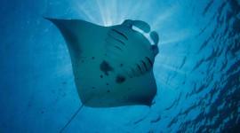 Underwater World Photo Download