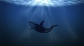 Underwater World Wallpaper 1080p