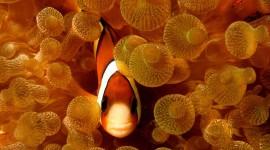 Underwater World Wallpaper Background