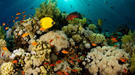 Underwater World Wallpaper Download