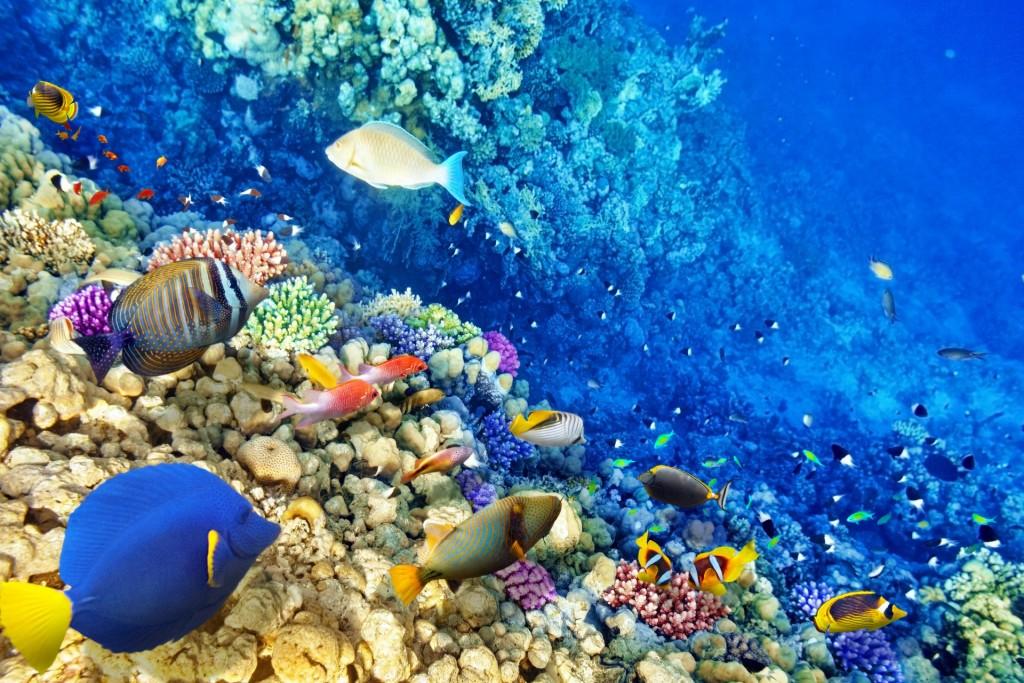 Underwater World wallpapers HD