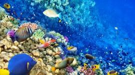 Underwater World Wallpaper For Desktop