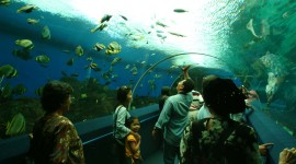 Underwater World Wallpaper For PC