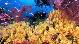 Underwater World Wallpaper Free
