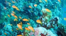 Underwater World Wallpaper Full HD