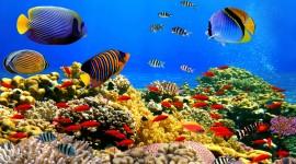 Underwater World Wallpaper Gallery