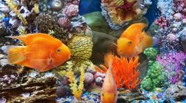 Underwater World Wallpaper HD