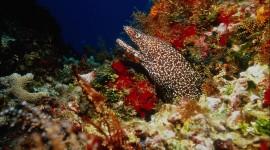 Underwater World Wallpaper High Definition