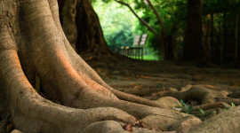 4K Tree Roots Best Wallpaper