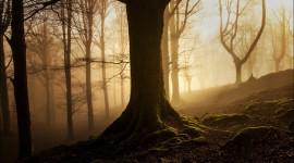 4K Tree Roots Photo Free