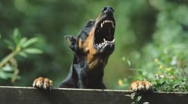 Angry Animal Wallpaper
