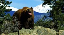 Angry Animal Desktop Wallpaper For PC