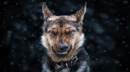 Angry Animal Desktop Wallpaper HD