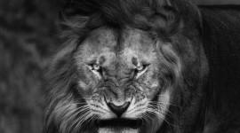Angry Animal Desktop Wallpaper HQ