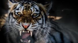 Angry Animal Wallpaper Free