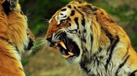 Angry Animal Wallpaper Full HD
