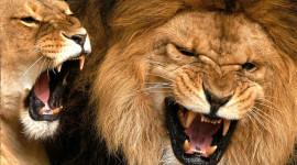 Angry Animal Wallpaper HD
