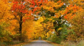 Autumn Road Desktop Wallpaper