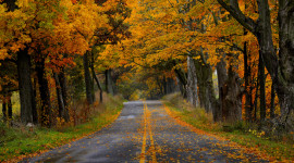 Autumn Road Desktop Wallpaper For PC
