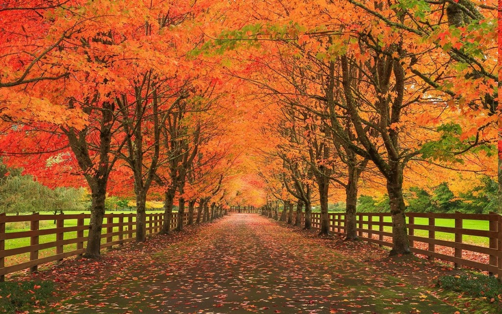 Autumn Road wallpapers HD