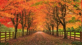 Autumn Road Desktop Wallpaper Free