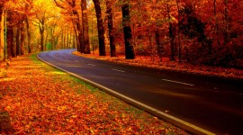 Autumn Road Desktop Wallpaper HQ