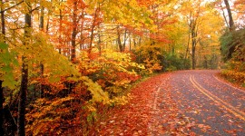 Autumn Road High Quality Wallpaper