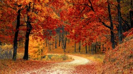Autumn Road Wallpaper Background