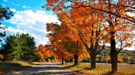 Autumn Road Wallpaper Download