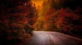 Autumn Road Wallpaper Download Free