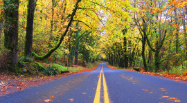 Autumn Road Wallpaper For PC