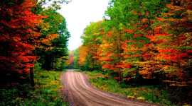Autumn Road Wallpaper Free