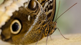 Butterfly Macro Aircraft Picture